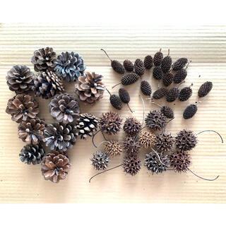 「松ぼっくり フウの実 ヤシャブシ 木の実3種類セット(カ)」〈処理済〉素材(ドライフラワー)