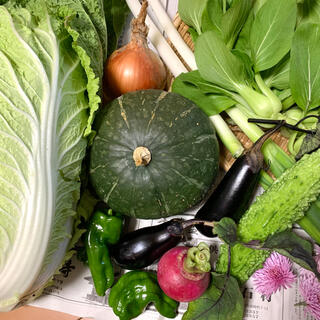 秋野菜、ご希望の野菜を対応致します(野菜)