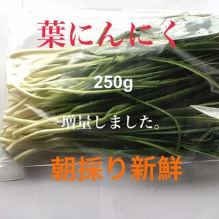 柔らかい「葉にんにく」250g 朝採り新鮮(増量いたしました。)(野菜)