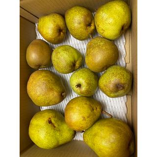 減農薬栽培!山形産 ラフランス&シルバーベル2種の洋梨コラボ激安コンビ4k(フルーツ)