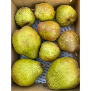 減農薬栽培山形産 3kラフランス高級大玉!シルバーベル2種食べ比べ(フルーツ)