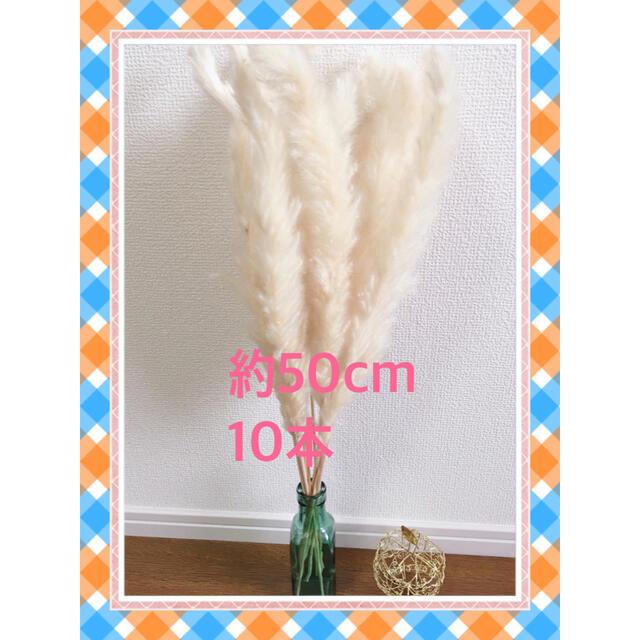 先着優先☆ パンパスグラス 10 ハンドメイドのフラワー/ガーデン(ドライフラワー)の商品写真