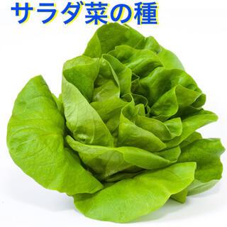 サラダ菜 タネ 50粒(野菜)