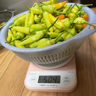 cabe orange Indonesia (島唐辛子)500g(野菜)