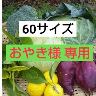 新鮮朝採り【野菜おためし♪おまかせセット】(野菜)