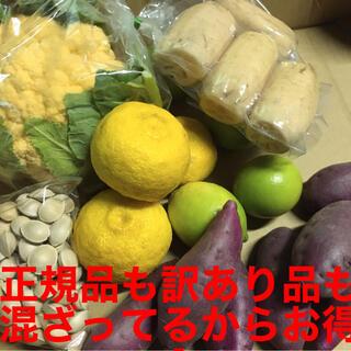 徳島産 野菜色々お買い得品 ちょっとずつセット(野菜)