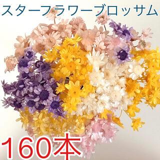 【訳あり】F スターフラワーブロッサム  160本(ドライフラワー)