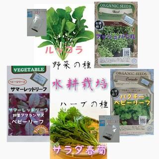 水耕栽培 固定種 有機種子 野菜の種 ハーブの種 家庭菜園(野菜)