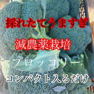 採れたて発送激うまブロッコリーコンパクト入るだけ(野菜)