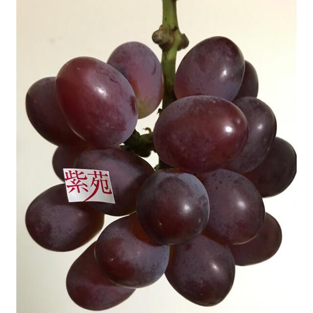 晴王 シャインマスカット グローコールマン 紫苑 クイーンニーナ 食品/飲料/酒の食品(フルーツ)の商品写真