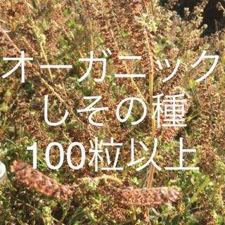 無農薬有機栽培 青シソの種 100粒以上 青紫蘇、青しそ、大葉、野菜の無農薬種(野菜)