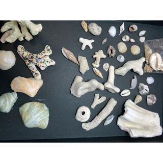 キワセイサクジョ(貴和製作所)の貝殻 シーグラス ハンドメイド パーツ(各種パーツ)
