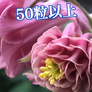 種 オダマキ タワー咲き50粒以上(その他)