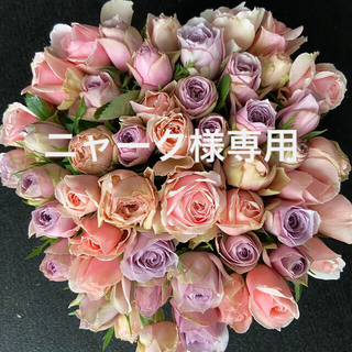 バラ・切り花・生花*くすみ系パープル&ピンクアレンジ*50本長さ30㎝産地直送!(その他)
