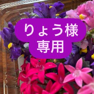 エディブルフラワーミックス(野菜)