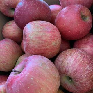 ふじリンゴ 訳あり品 10kg  お値打ち品(フルーツ)