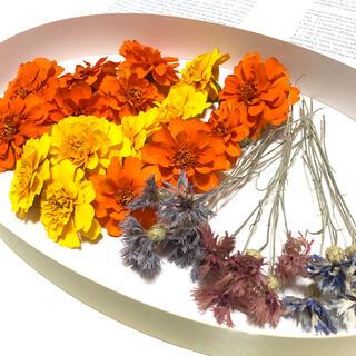 [年末セール]マリーゴールドと矢車草 ビタミンカラー 花材 ハーバリウム  F(ドライフラワー)