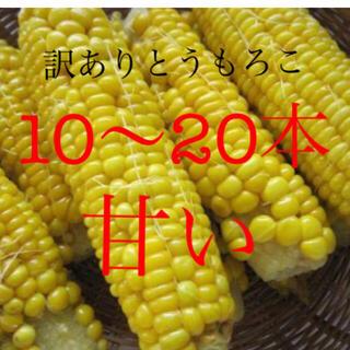 激安!訳ありとうもろこし10〜20本入り(野菜)