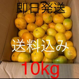 三重県産傷あり訳ありみかん約10kg(フルーツ)