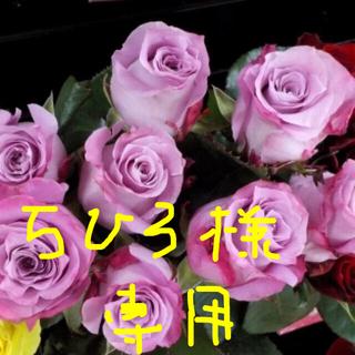 薔薇挿し木苗(その他)