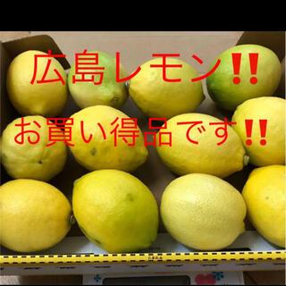 広島 国産レモン 12個(フルーツ)