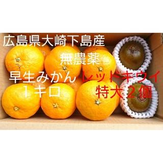 無農薬!広島県大崎下島産 早生みかん1キロ&レッドキウイ特大2個 お試しセット(フルーツ)