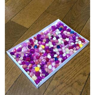 お花屋さんが作った小ちゃくて可愛い千日紅のドライフラワー200個➕おまけ(ドライフラワー)