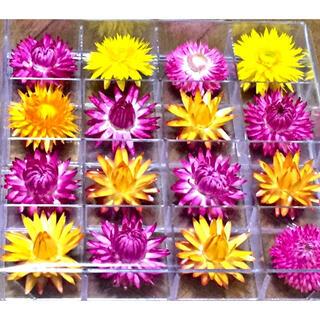 お花屋さんが作った特選コロロのお詰め合わせです‼️(ドライフラワー)