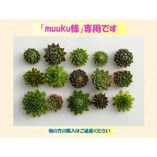 多肉植物 【0473】  センペル15種セット(名前付き)(その他)