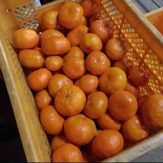熊本みかん(肥のあけぼの) 家庭用 5キロ(フルーツ)