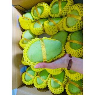 本日発送‼️酸っぱいマンゴー(  10キロ)(フルーツ)