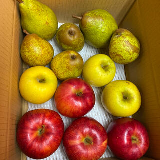 減農薬栽培山形産 ラフランス シナノゴールりんご ジョナゴールド シルバーベル(フルーツ)