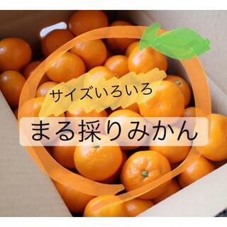 【送料無料】サイズいろいろ・まる採りみかん2.8kg(フルーツ)