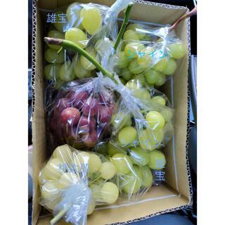 シャインマスカット グローコールマン  紫苑 クインニーナ ナガノパープル(フルーツ)