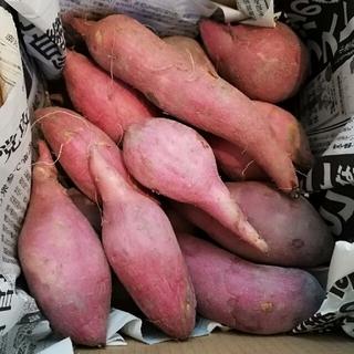 【送料無料】安納芋 サツマイモ 小2kg以上 (野菜)