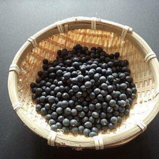 黒千石大豆 (小粒大豆) 無農薬無化学肥料栽培 北海道から送料無料 !!(米/穀物)