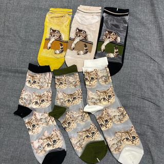 6セット 【新品 未使用】 PAUL&JOE  靴下 ソックス くるぶし 猫