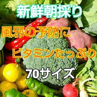 新鮮朝採り【ビタミンたっぷりとれるセット♪】農薬不使用(野菜)