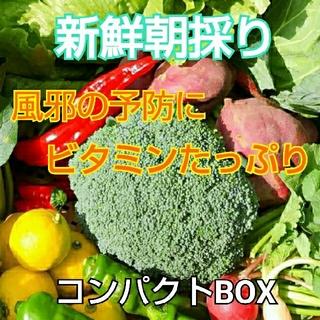 新鮮朝採り【風邪の予防にビタミンたっぷりセット】農薬不使用(野菜)