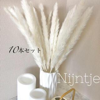 パンパスグラス 10本 ホワイト インテリア 北欧 ドライフラワー(ドライフラワー)