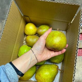 減農薬栽培!山形産 ラフランス&シルバーベル2種の洋梨コラボ激安コンビ3.5k(フルーツ)