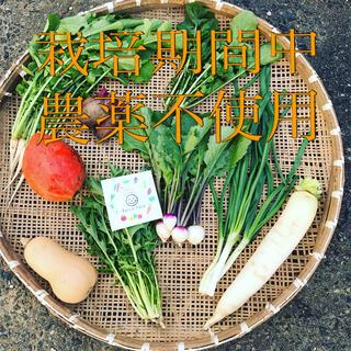 【11月発送】栽培期間中農薬不使用・旬彩野菜バスケット(野菜)