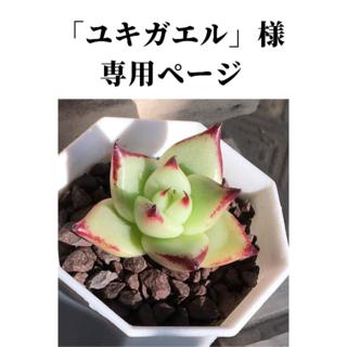ユキガエル様 専用ページ(その他)