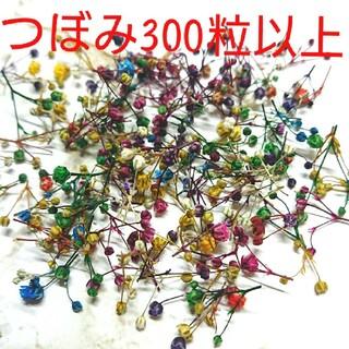 かすみ草ドライフラワー つぼみ300粒(ドライフラワー)