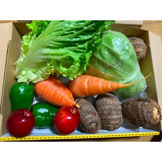 新鮮野菜の詰め合わせ(野菜)