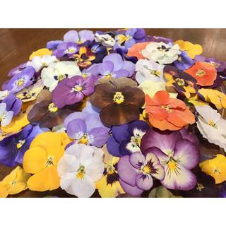 お花屋さんが作った可愛いビオラのドライフラワー山盛り70冠です‼️(ドライフラワー)
