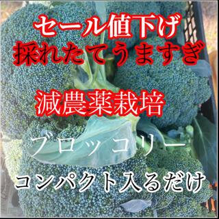 値下げ‼️うますぎ採れたて発送激うまブロッコリーコンパクト入るだけ(野菜)