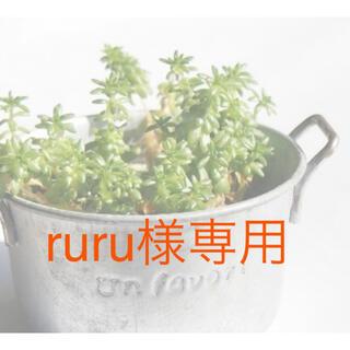 多肉植物 ruru様専用(その他)