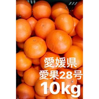 愛媛県産 愛果28号 10kg(フルーツ)