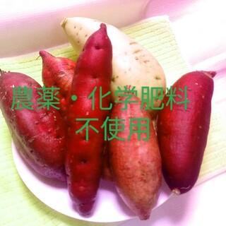 ⭐パープルスイートロード5kg農薬化学有機肥料不使用さつまいも🍠(野菜)